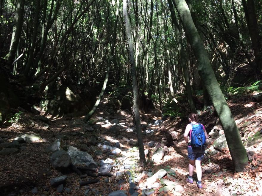 Wandern La Zarza 7