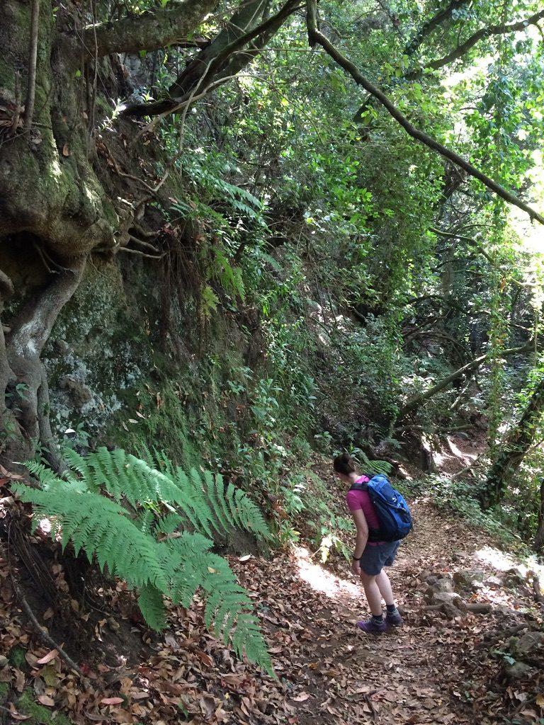 Wandern La Zarza 9
