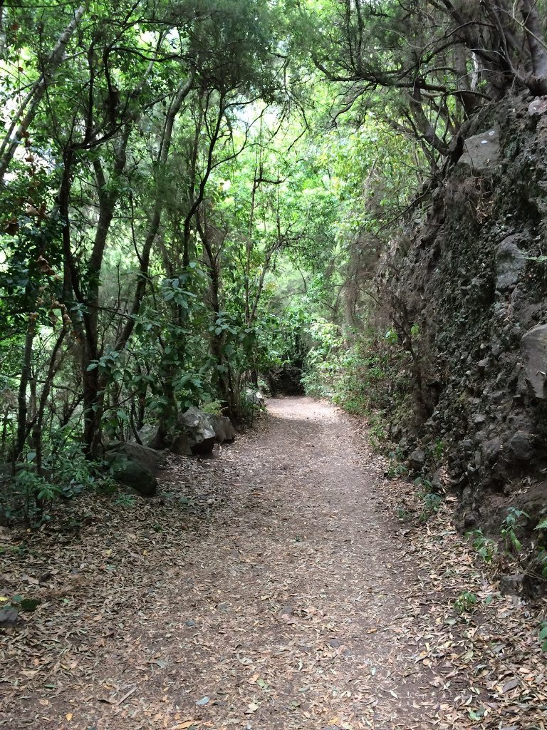 Wandern Los Tilos 3