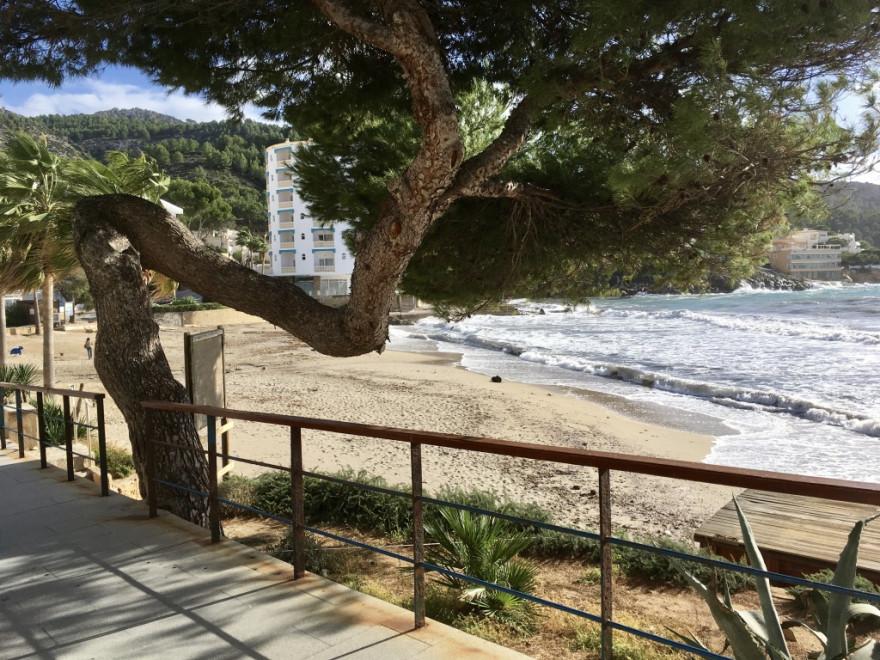San Telm Käffchen und Wellen 5