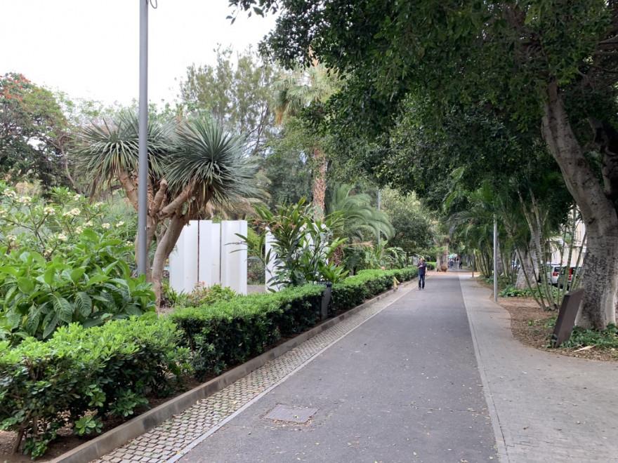 Sightseeing in Santa Cruz de Tenerife 30