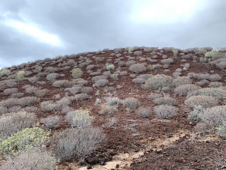 Wandern auf Teneriffa Küstenwanderung Malpais de Rasca 19