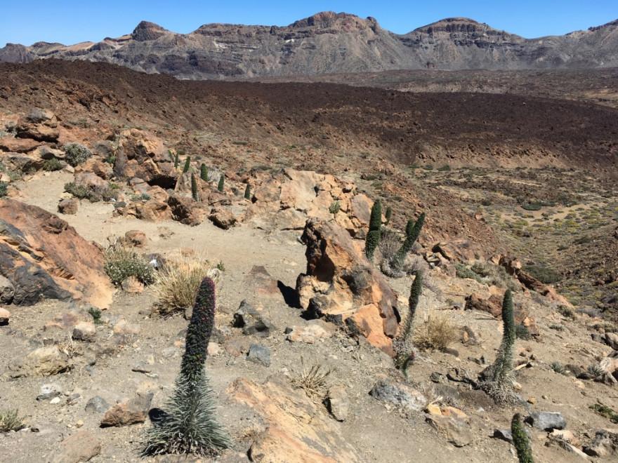 Wandern auf Teneriffa Rund um den Teide 10