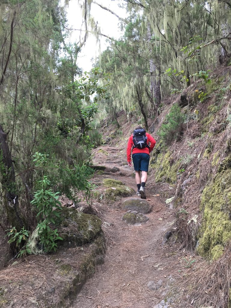 Wandern auf Teneriffa Rund um die Orgelpfeifen 16