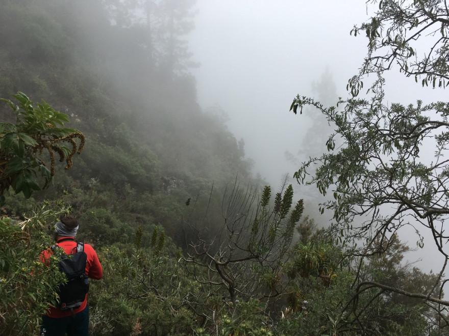 Wandern auf Teneriffa Rund um die Orgelpfeifen 20